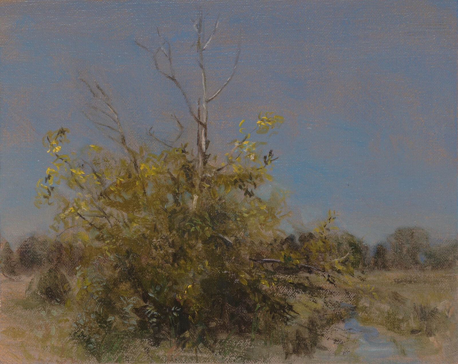 Liza Visagie - Yellow Bush. Oil on Linen 7 x 9 inches