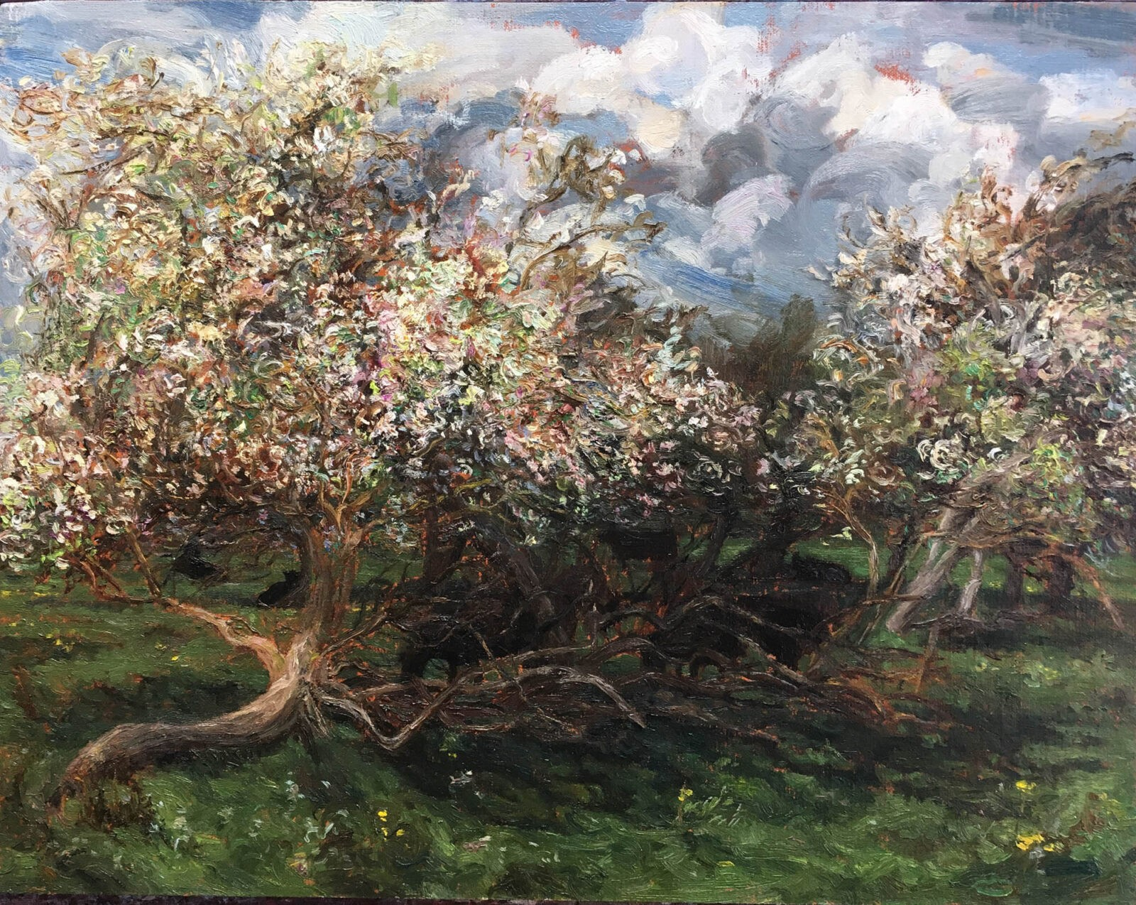 Liza Visagie - Spring Orchard. Oil on Linen 12 x 16 inches